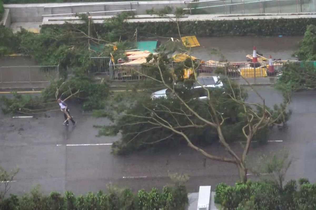 Fallen trees lie on a road in Hong Kong during Typhoon Mangkhut on Sept 16, 2018.