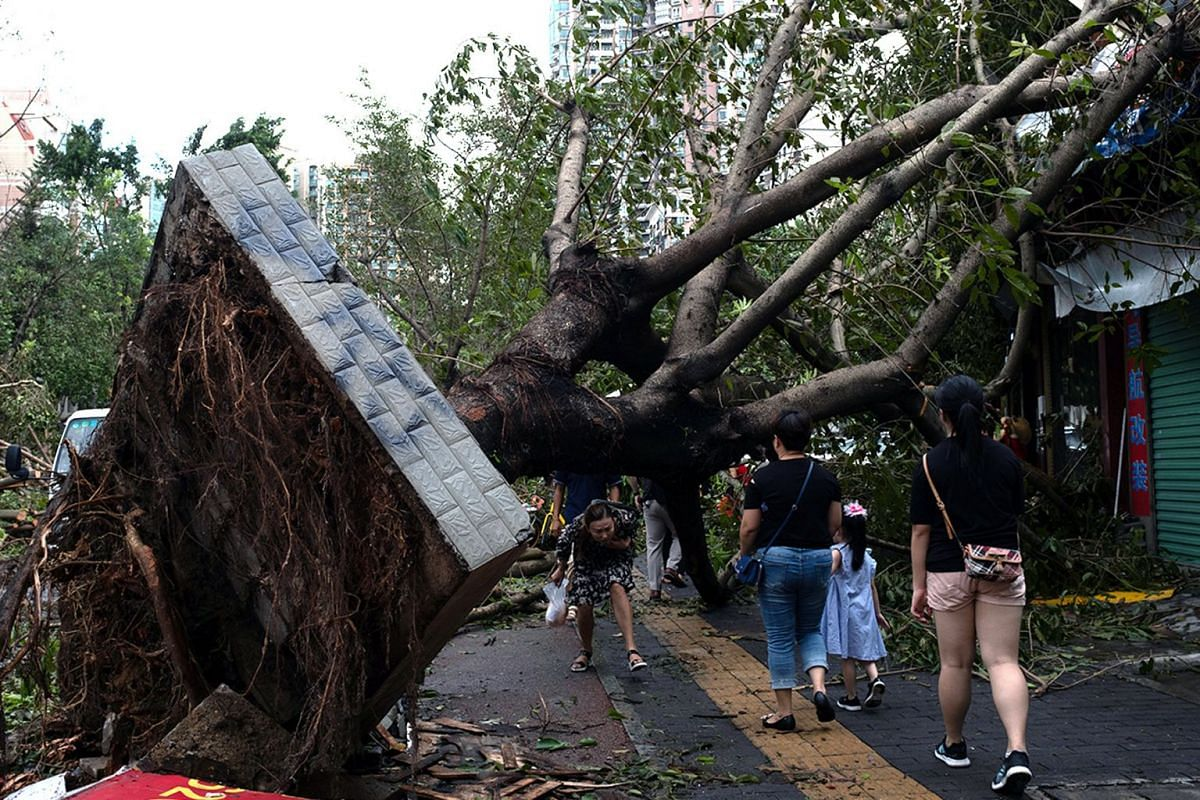 Many trees were uprooted in Shenzhen on Sept 17, 2018, after Super Typhoon Mangkhut hit China's Guangdong province.