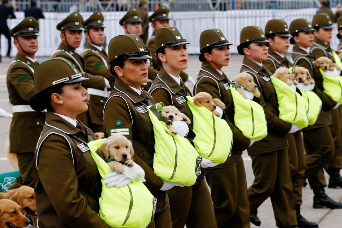 Chilean police officers march with the puppies of future police dogs during the annual military parade at the Bernardo O'Higgins park in Santiago, Chile, September 19, 2018. PHOTO: REUTERS/RODRIGO GARRIDO