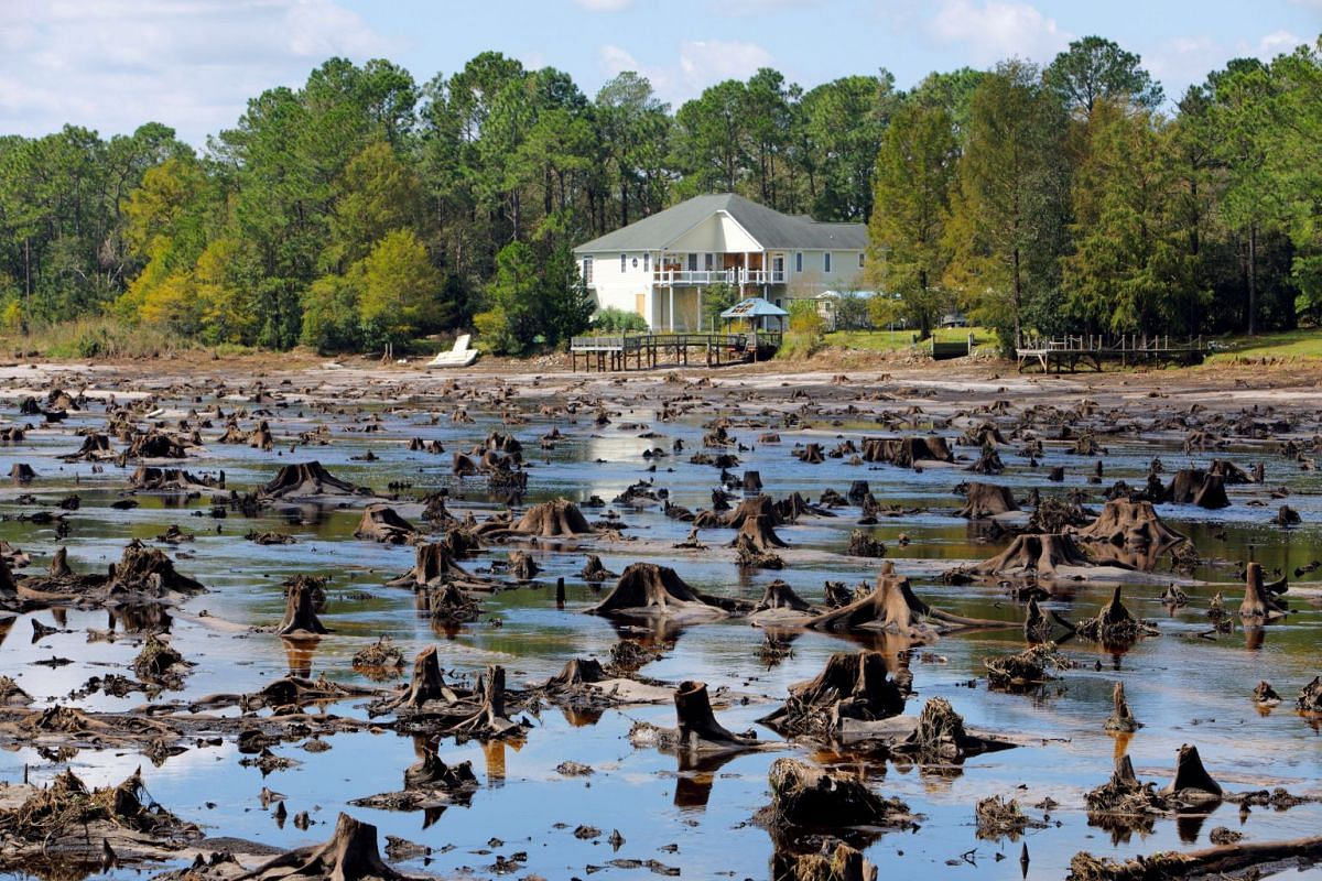 Old tree stumps that used to be at the bottom of Patricia Lake are revealed after it emptied when its dam collapsed in the aftermath of Hurricane Florence, in Boiling Spring Lakes, North Carolina, U.S., September 19, 2018. PHOTO: REUTERS