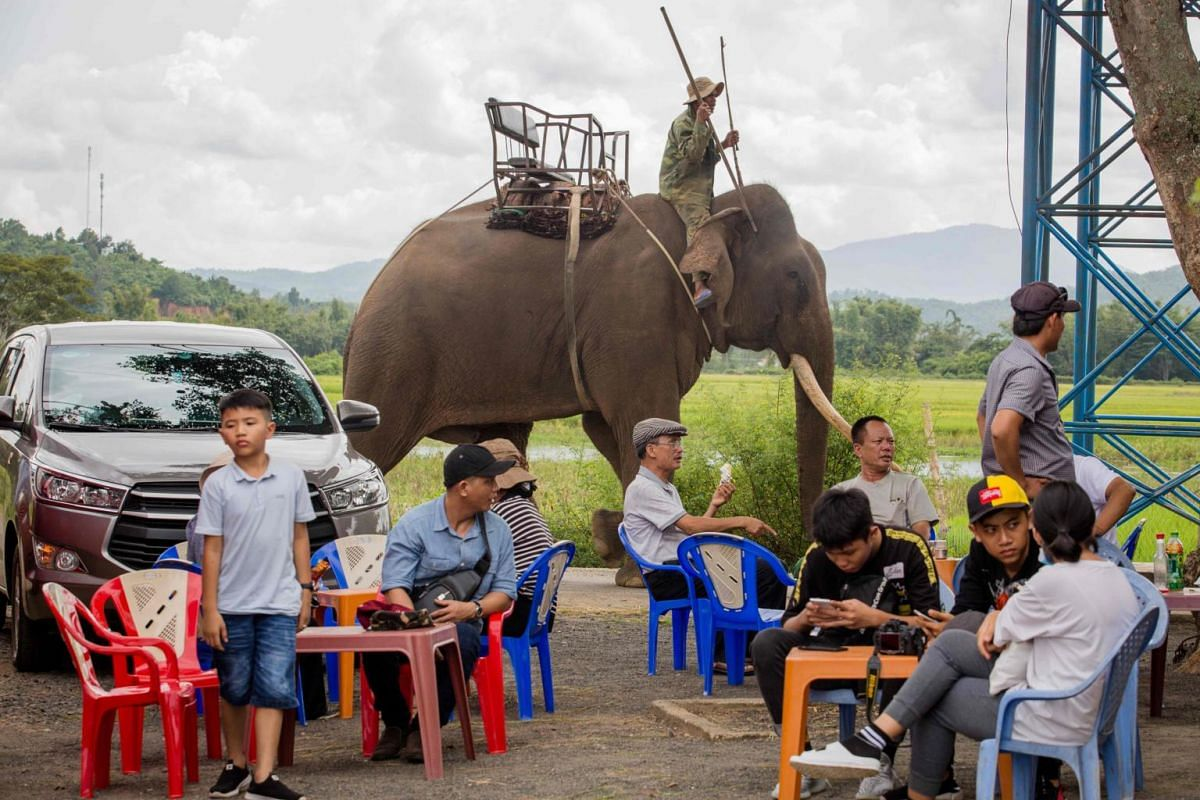 A mahout walks his elephant while tourists hang out after a round of elephant trekking in a resort in Lien Son town, Dak Lak province.