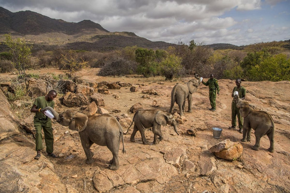 Keepers feed baby elephants at the Reteti Elephant Sanctuary in northern Kenya, on Feb 11, 2017.