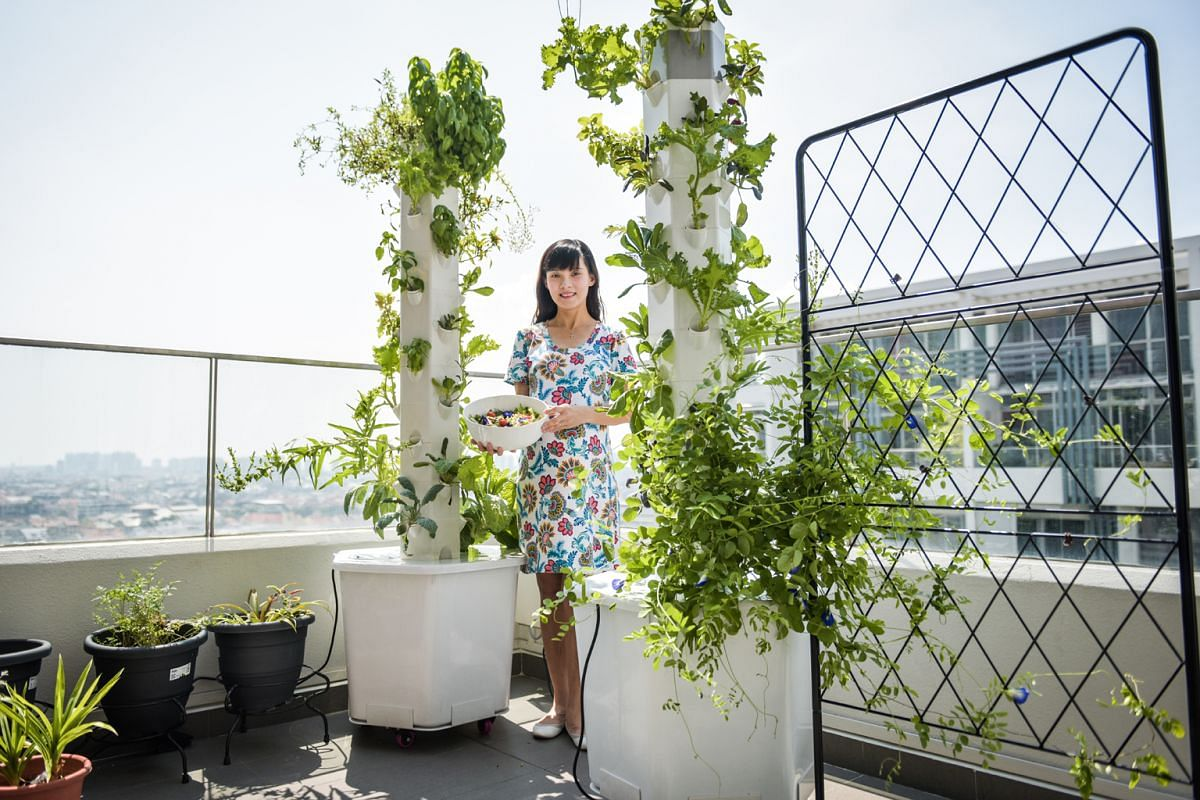 Ms Anlinna Lim grows more than 100 types of plants, including kale, mustard green, purple spinach and bird's eye chilli, in three vertical smart gardens by Aerospring Gardens.
