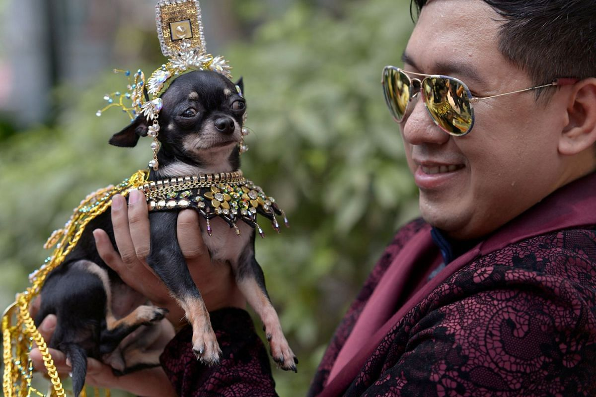 """A Chihuahua dressed as Elizabeth Taylor in the movie """"Cleopatra"""" poses with its owner during an event held ahead of World Animal Day celebrations at Eastwood City Walk of Fame in Quezon City, Metro Manila, Philippines, October 3, 2018."""