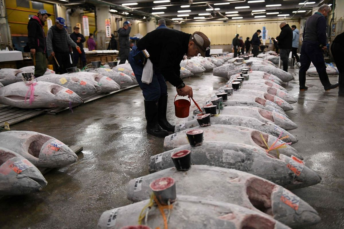 Frozen tuna lined up in rows, ahead of the first auction of the new year, at the Tsukiji fish market in Tokyo.