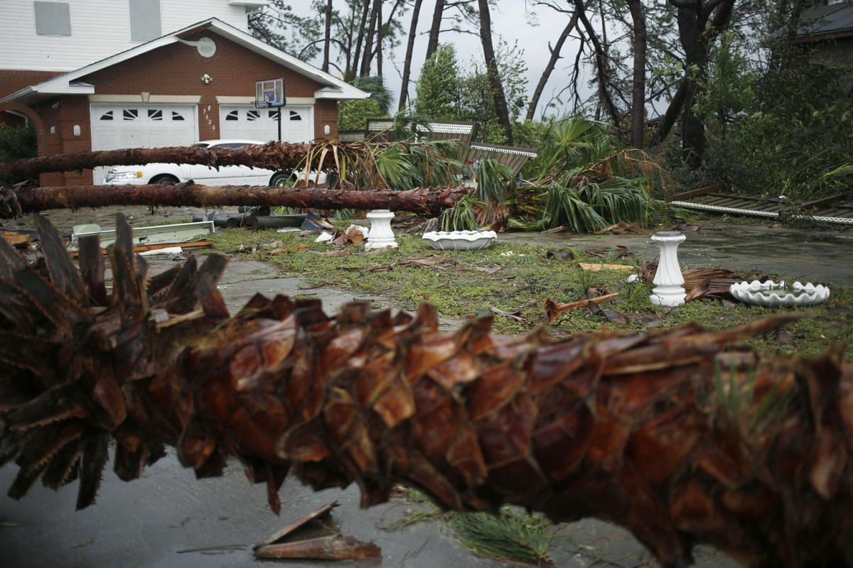 Palm trees lay on the ground in front of a home as Hurricane Michael makes landfall in Panama City Beach, Florida, on Oct 10, 2018.