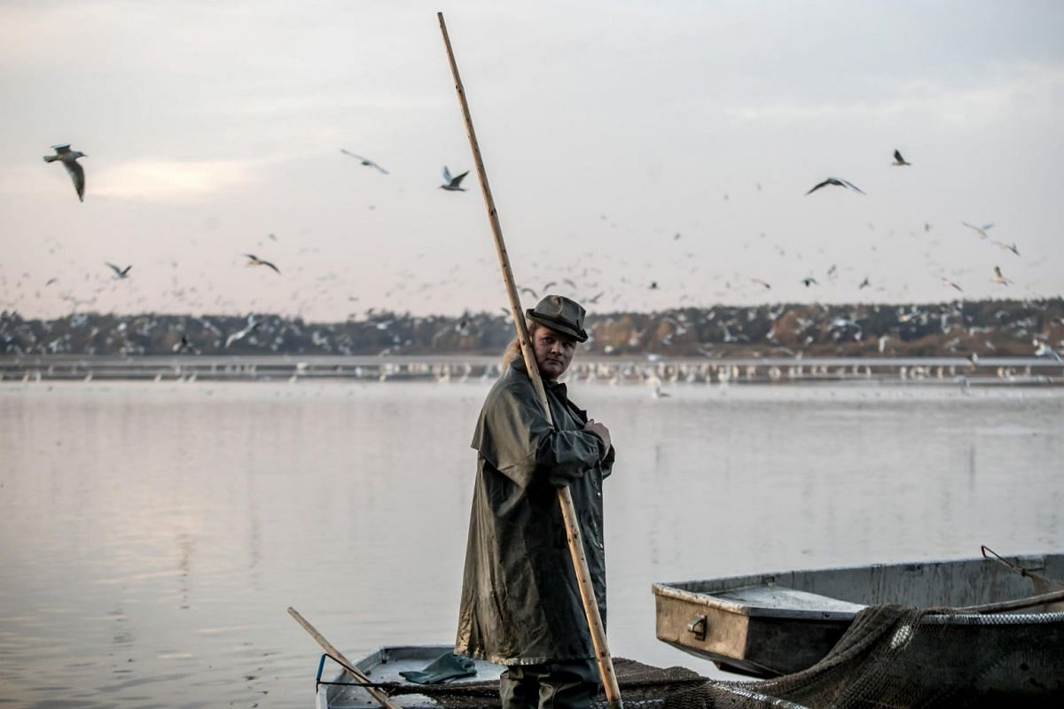 Fishermen select fish during the traditional carp haul at Velky Tisy pond near Trebon, Czech Republic, on Oct 15, 2018.