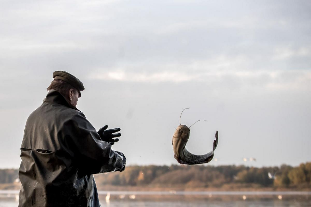 A fisherman throws a fish during the traditional carp haul at Velky Tisy pond near Trebon, Czech Republic, on Oct 15, 2018.