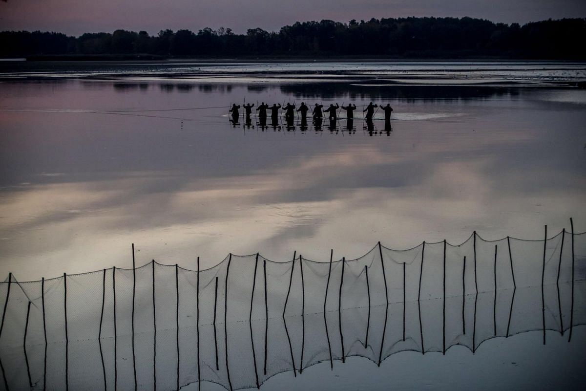 Fishermen pull a net during the traditional carp haul at Velky Tisy pond near Trebon, Czech Republic, on Oct 15, 2018.
