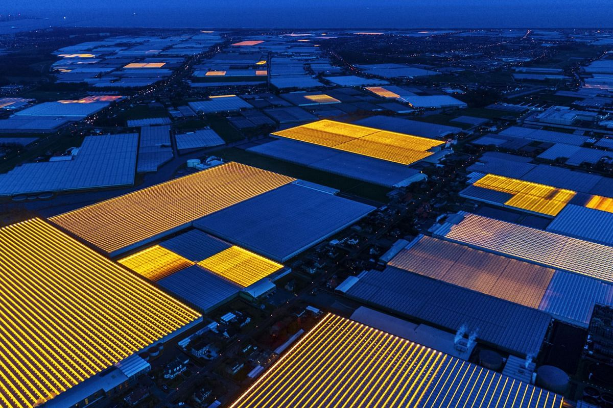 """Agricultural greenhouses in the Westland region of the Netherlands, which with 80 per cent of its cultivated land under glass, is known as the country's """"greenhouse capital"""". Climate-controlled farms such as these grow crops around the clock an"""