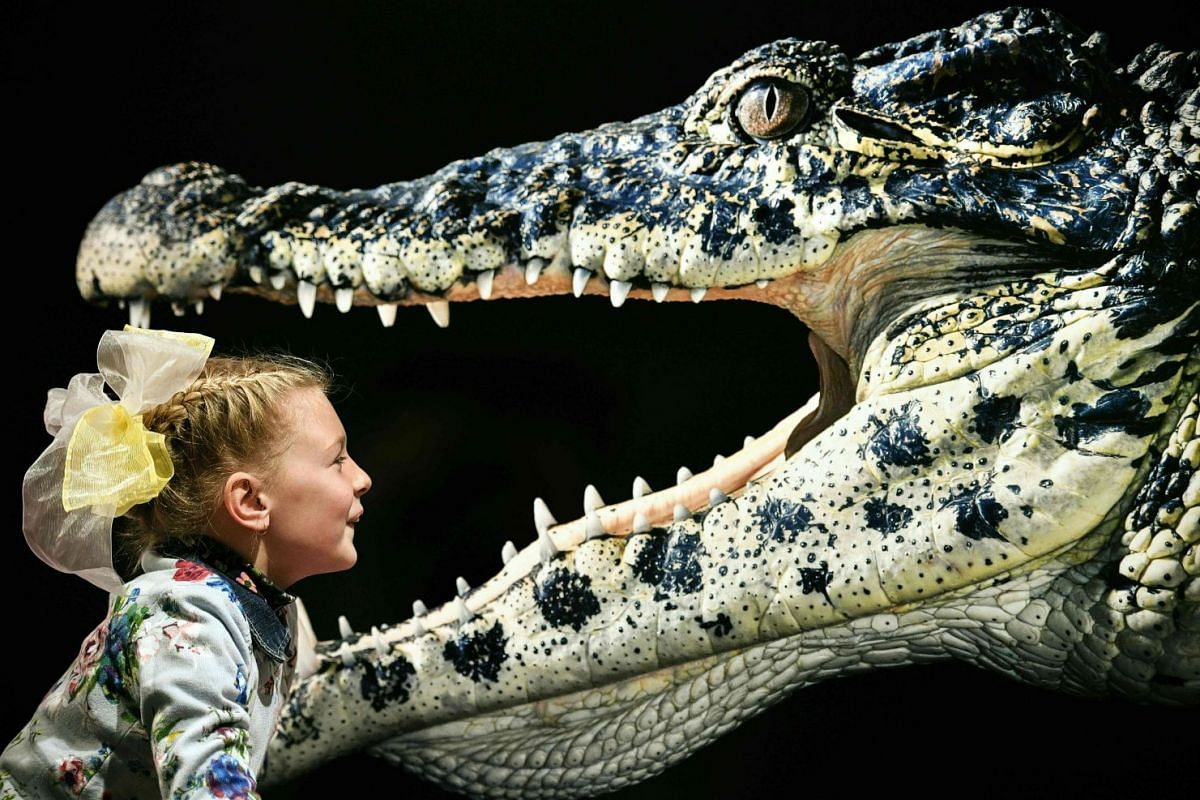 A young visitor looks at the photograph 'Cuban Crocodile' by Tim Flach, a British photographer who specialises in studio photography of animals, during his exhibition in Moscow on October 20, 2018. PHOTO: AFP