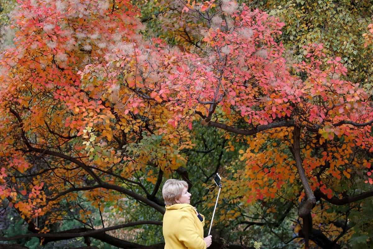 A woman takes a selfie at Moscow State University's Botanic Garden (Apothecary Garden) in autumn foliage in Moscow, Russia, on Oct 20, 2018.