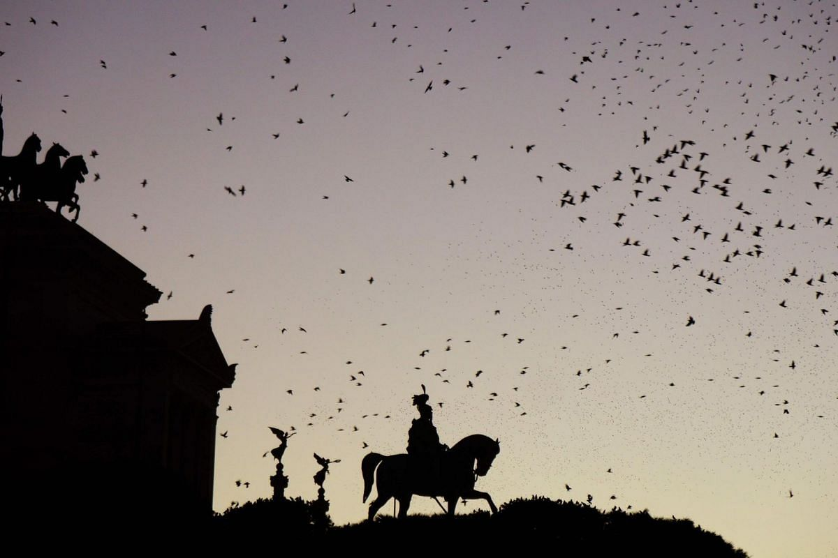 Starlings flying in a murmuration over Rome's Altare della Patria  (Altar of the Fatherland) monument, built in honour of Italy's King Victor Emmanuel II, on Nov 7, 2018.