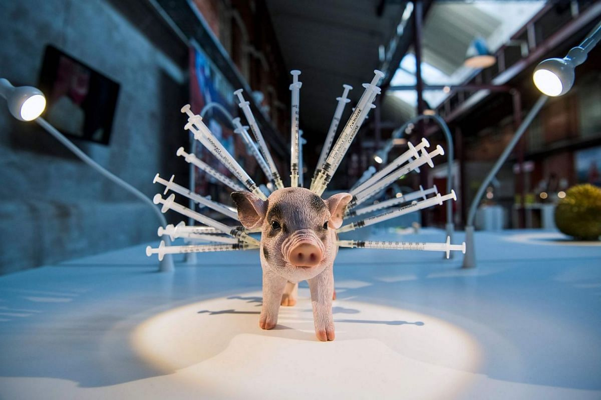 A statue of a pig with syringes stuck in it, representing pork supplied by factory farming in the United States.