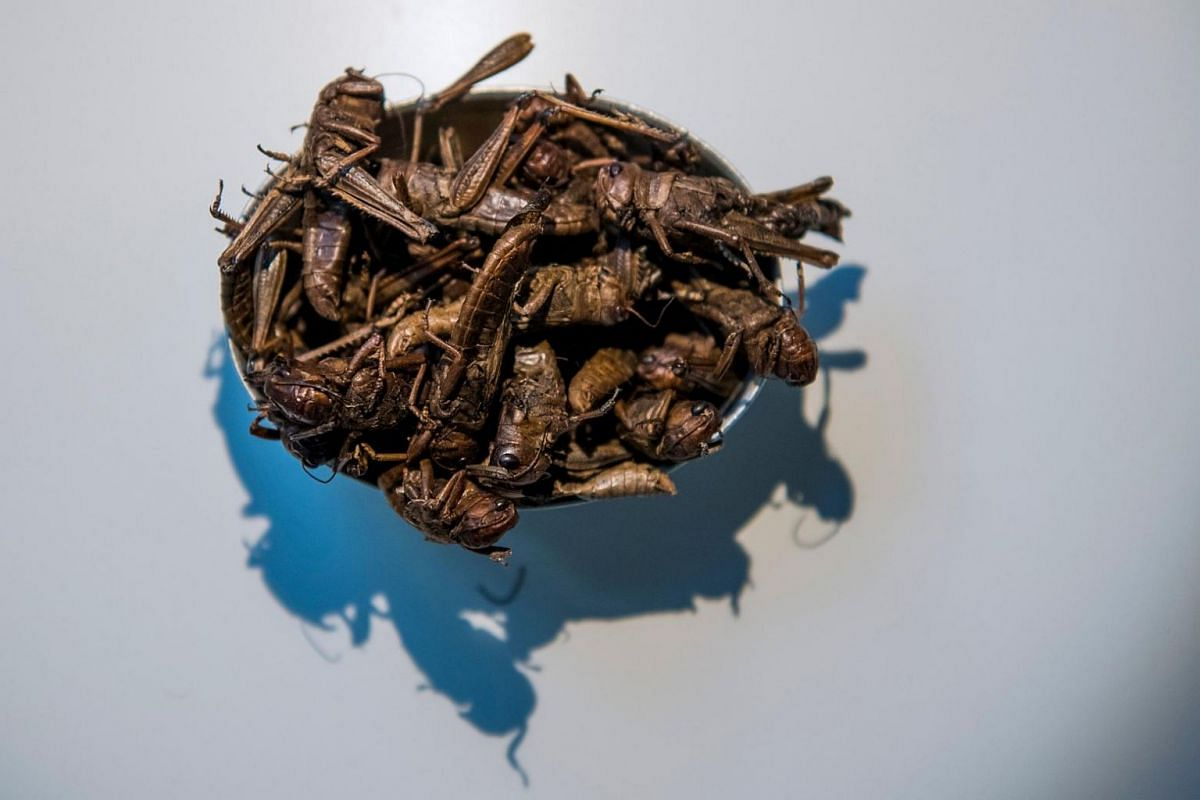 The Nsenene, a bar snack from Uganda made of grasshoppers.