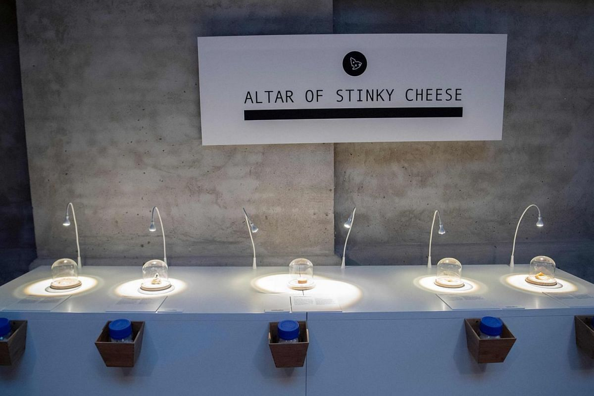 (From left) Stinky cheeses Epoisses, Roquefort, Vieux-Boulogne, Gamle Oles farfar, and Stinking Bishop on display at the Disgusting Food Museum.