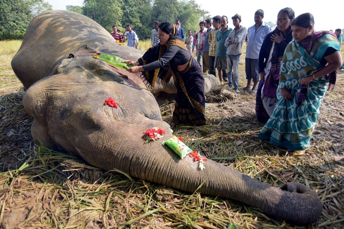 A woman prays as she touches the carcass of a male elephant, who according to forest officials was electrocuted in a paddy field, at Gendhali Bebejia village in Nagaon district in the northeastern state of Assam, India, November 20, 2018. PHOTO: REUT