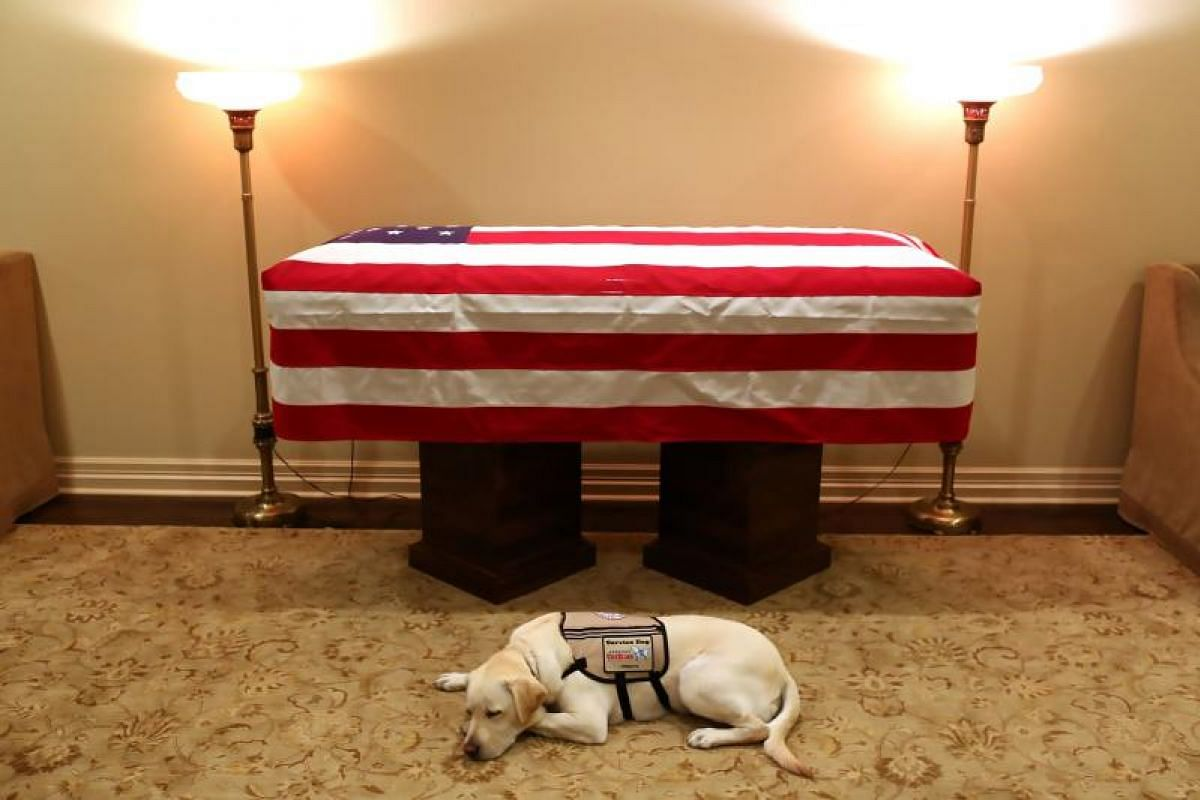 This handout photograph obtained December 3, 2018 courtesy of the Office of George H.W. Bush, shows the yellow Labrador retiever Sully, the late former US president's faithful service dog, lying in front of Bush's casket on December 2, 2018 in Housto
