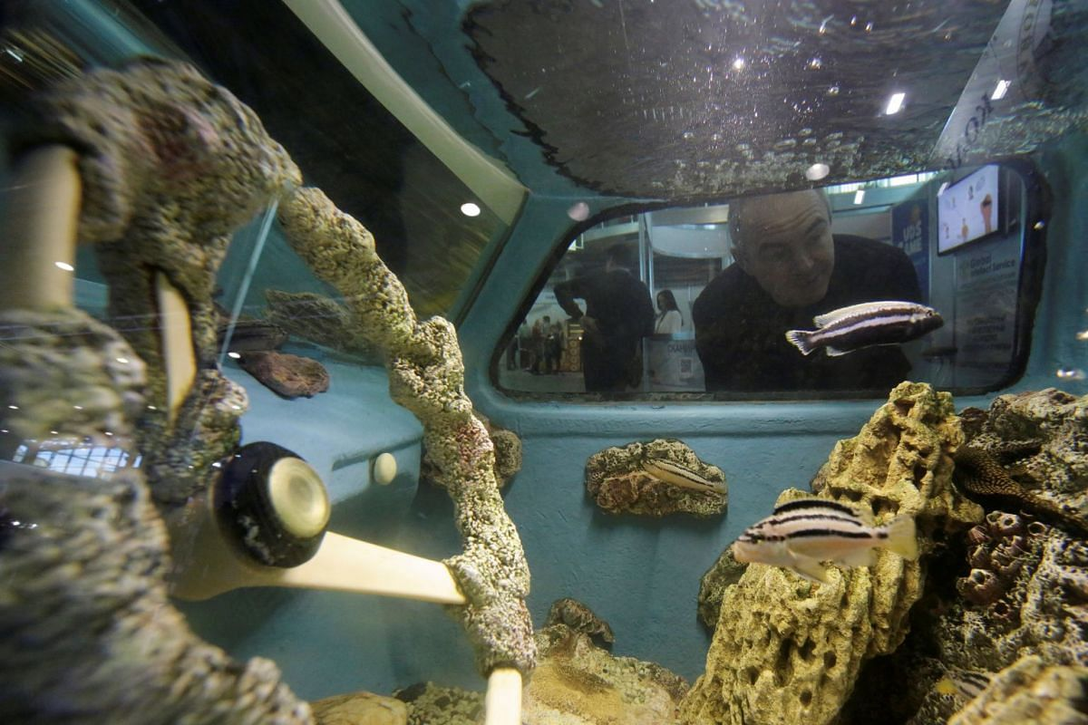 A visitor looks at a Soviet-made Zaporozhets retro car, which was converted into an aquarium at a small and medium business exhibition in St. Petersburg, Russia December 5, 2018. PHOTO: REUTERS