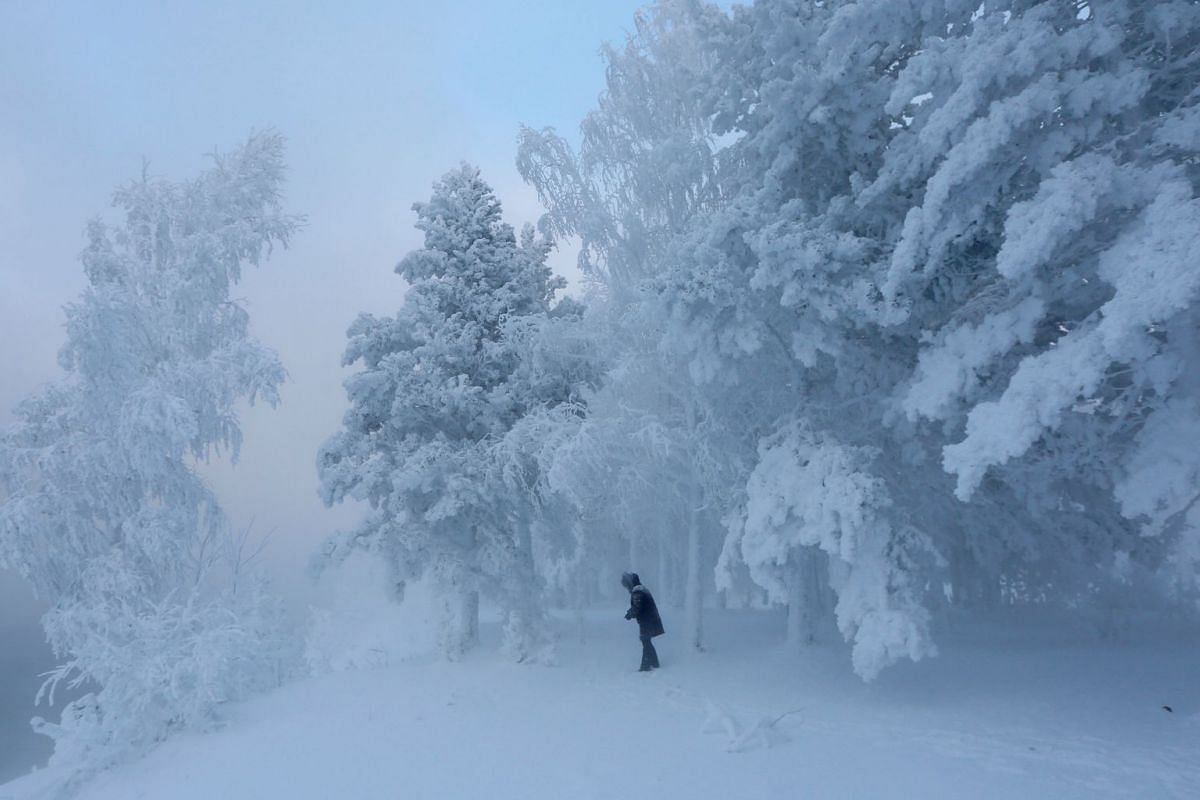 A woman walks amidst trees covered with hoarfrost and snow in a forest on the bank of the Yenisei River, with the air temperature at about minus 32 degrees Celsius (minus 25.6 degrees Fahrenheit), near the Siberian city of Krasnoyarsk, Russia Decembe