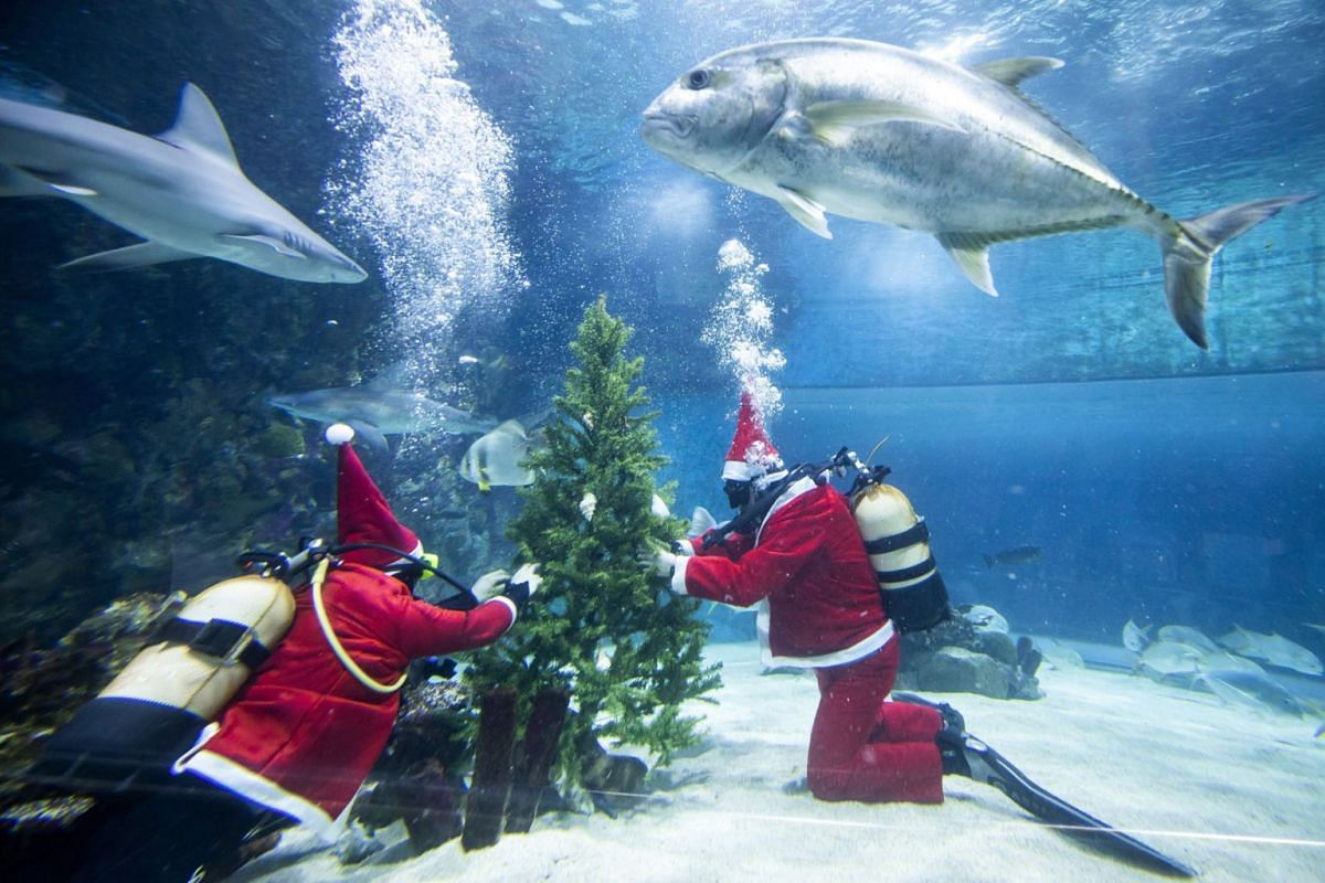 Scuba divers dressed as Santa Claus decorate a Christmas tree with seashells in a fish tank of the Tropicarium in Budapest, Hungary, December 6, 2018. PHOTO: EPA-EFE