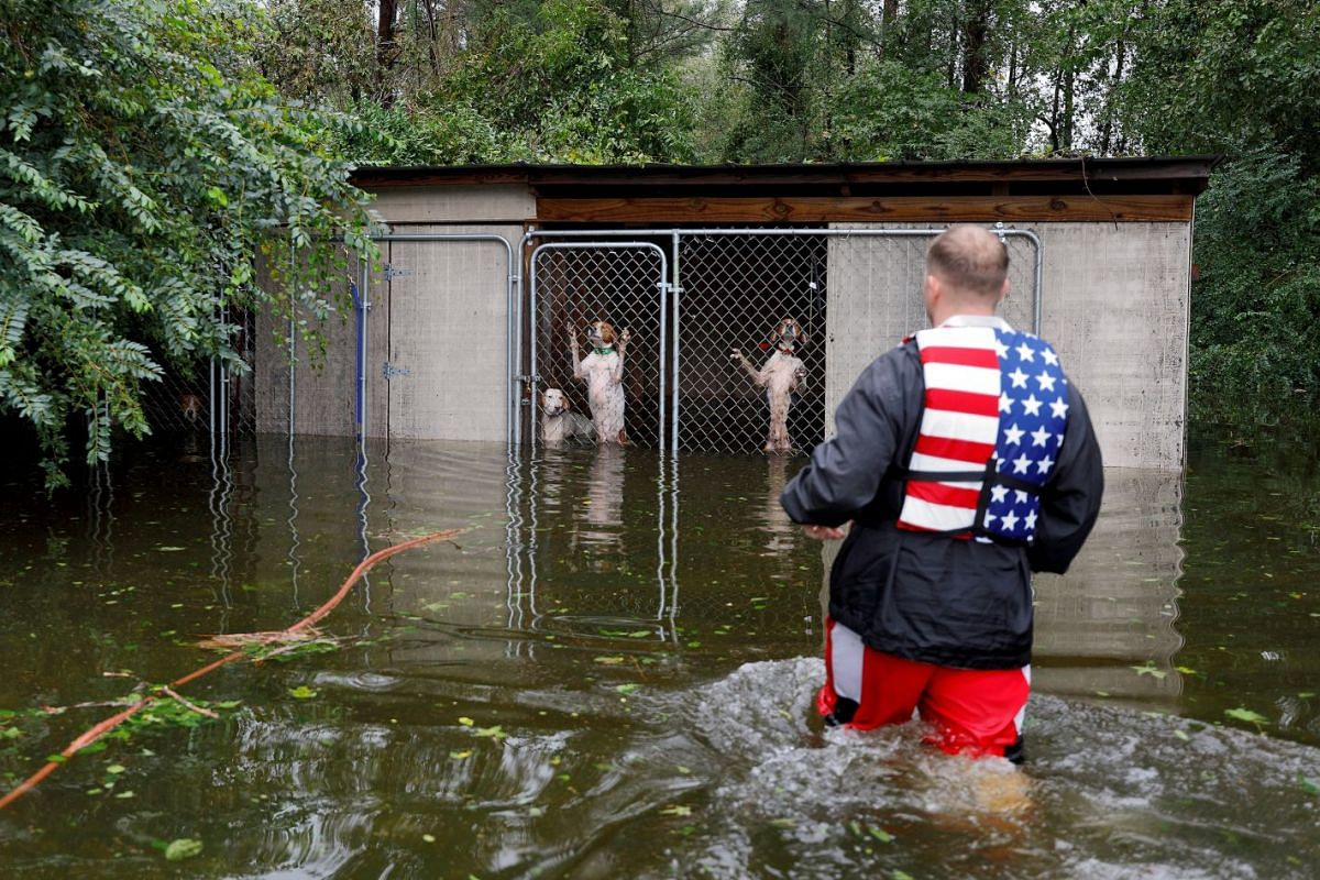 Panicked dogs, left caged by an owner who fled rising flood waters in the aftermath of Hurricane Florence, are rescued by volunteer rescuer Ryan Nichols in Leland, North Carolina, on Sept 16, 2018.