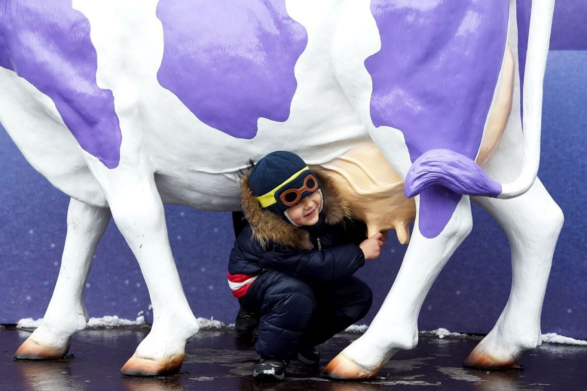 A boy poses for a picture at an advert that uses a cow for it's logo during an Orthodox Christmas Fair in the central of Ukrainian capital of Kiev, on January 3, 2018. PHOTO: AFP