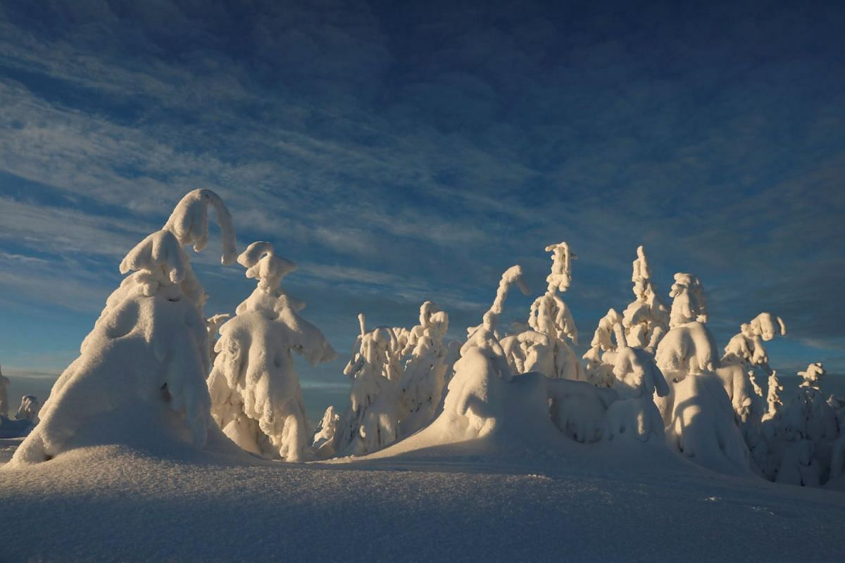 Trees covered with snow are seen at a mountain resort in Szczyrk, Poland.
