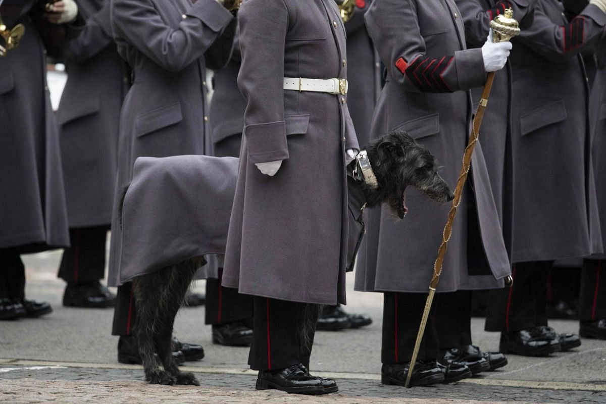 The Irish Guards including Irish Wolfhound Domhnall, their regimental mascot, form up ahead a military Guard of Honour for Japanese Prime Minister Shinzo Abe at the Foreign and Commonwealth Office (FCO) in central London on January 10, 2019 ahead of