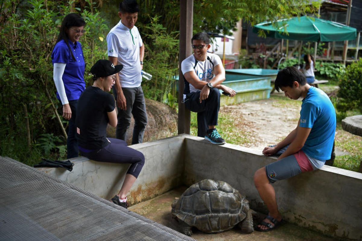 Ms Connie Tan, 48, the owner of The Live Turtle and Tortoise Museum (left) together with volunteers have a moment with Xiao Hei, a female Aldabra giant tortoise who is more than 30 years old, at the Chinese Gardens site. Xiao Hei is the most popular
