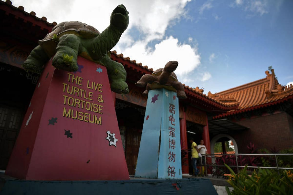 The iconic tortises that grace the main entrance of the Live Turtle and Tortoise Museum at its Chinese Gardens site will be left behind. They were showcased a few years after they moved to the Chinese Garden from it former Neil Road site.
