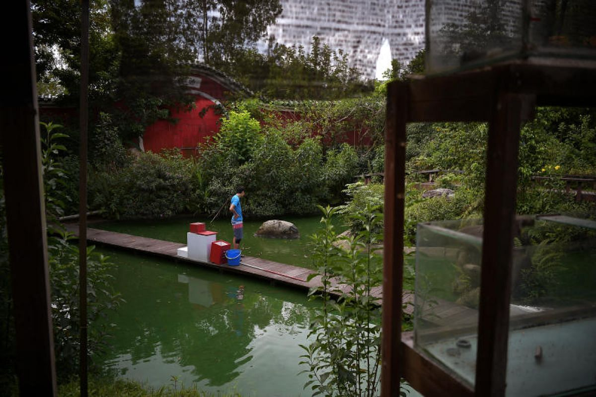 Volunteer Norman Lee, 29, a cabin crew takes a moment at the pond of the Live Turtle and Tortoise Museum in Chinese Gardens.