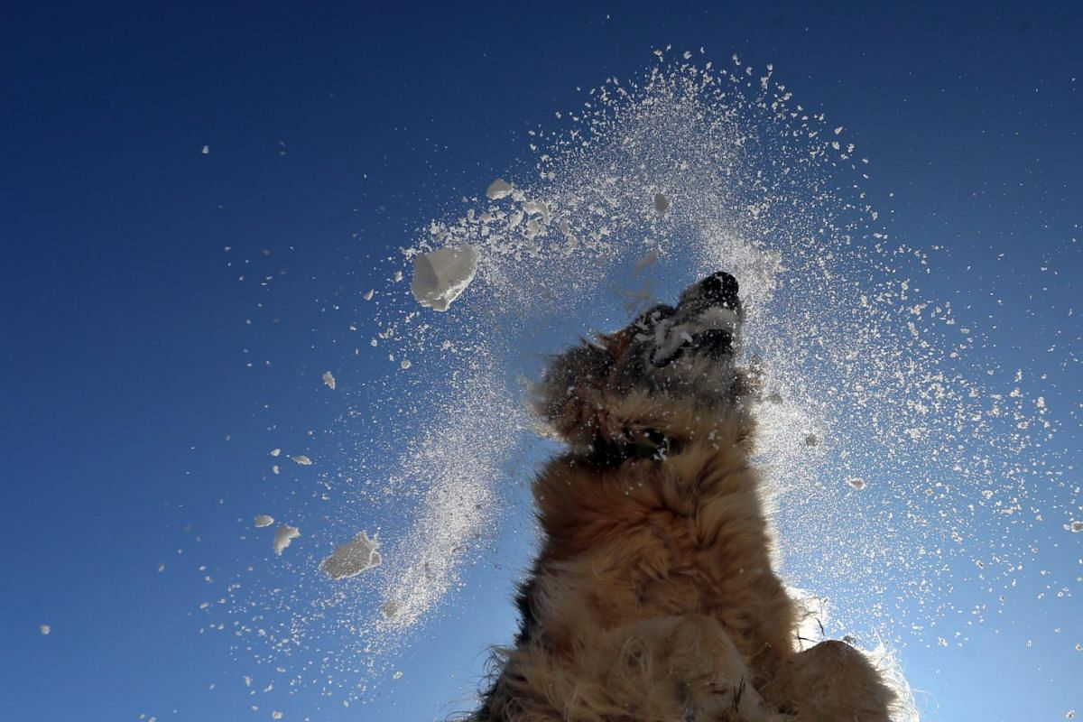 A dog jumps to grab a snowball with its mouth in Kaufbeuren, Bavaria, on Jan 22, 2019.