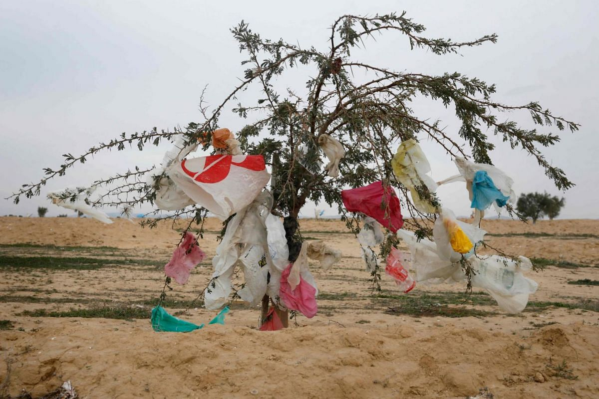 Plastic bags cling to a tree after a storm near the Dudaim dump in Israel's Negev desert near the Bedouin city of Rahat on Jan 20, 2019.