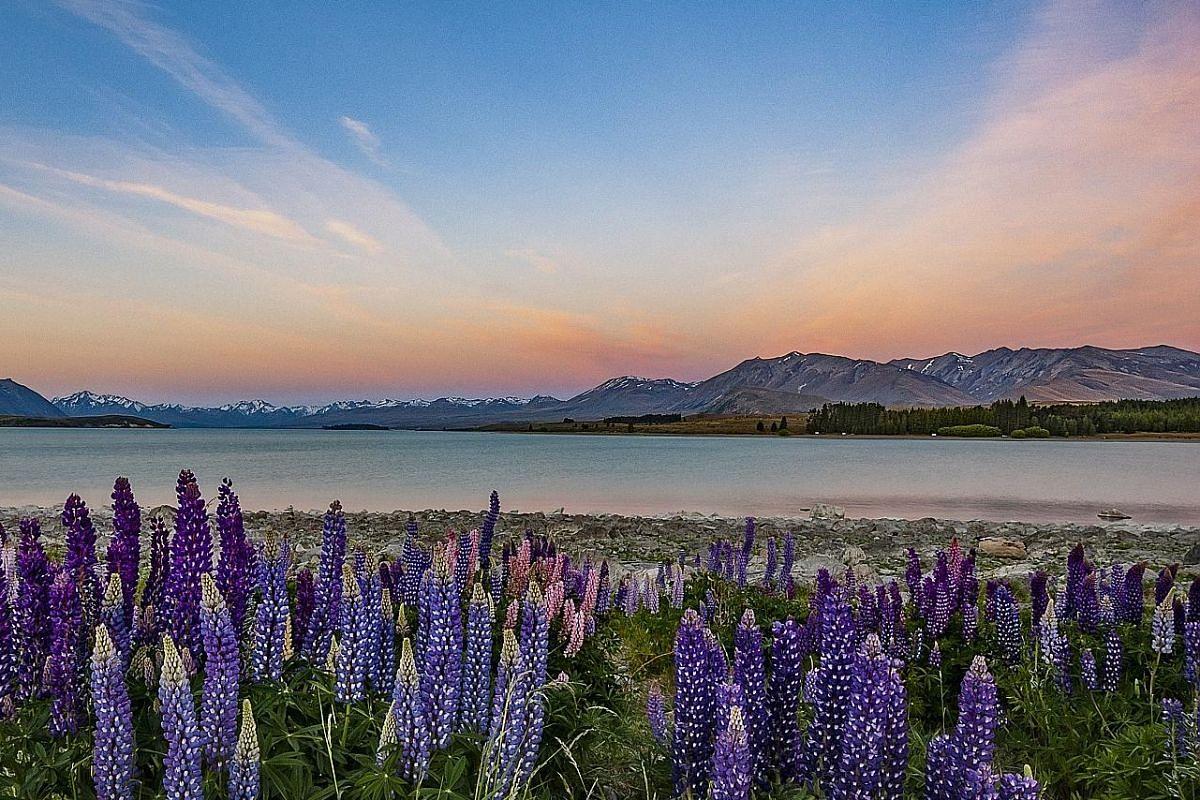 Lake Tekapo, New Zealand.