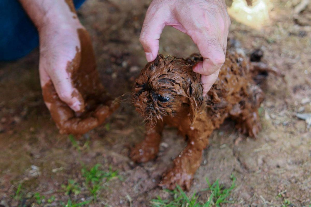 A person cleans a puppy covered in mud after the collapse of the Feijao dam which released a wave of red iron ore waste on Jan 25, 2019.