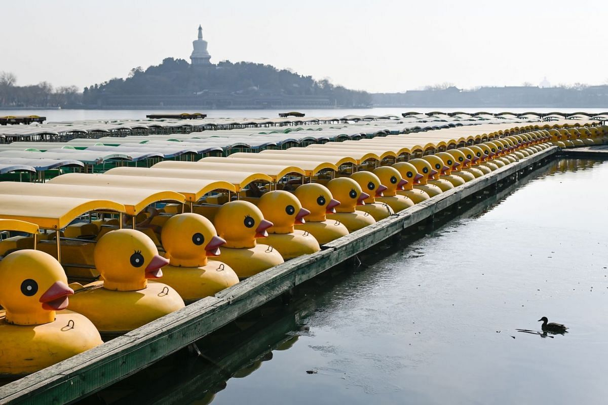 A duck (R) looks on opposite a row of moored duck-themed boats at a lake in Beijing on January 28, 2019. PHOTO: AFP