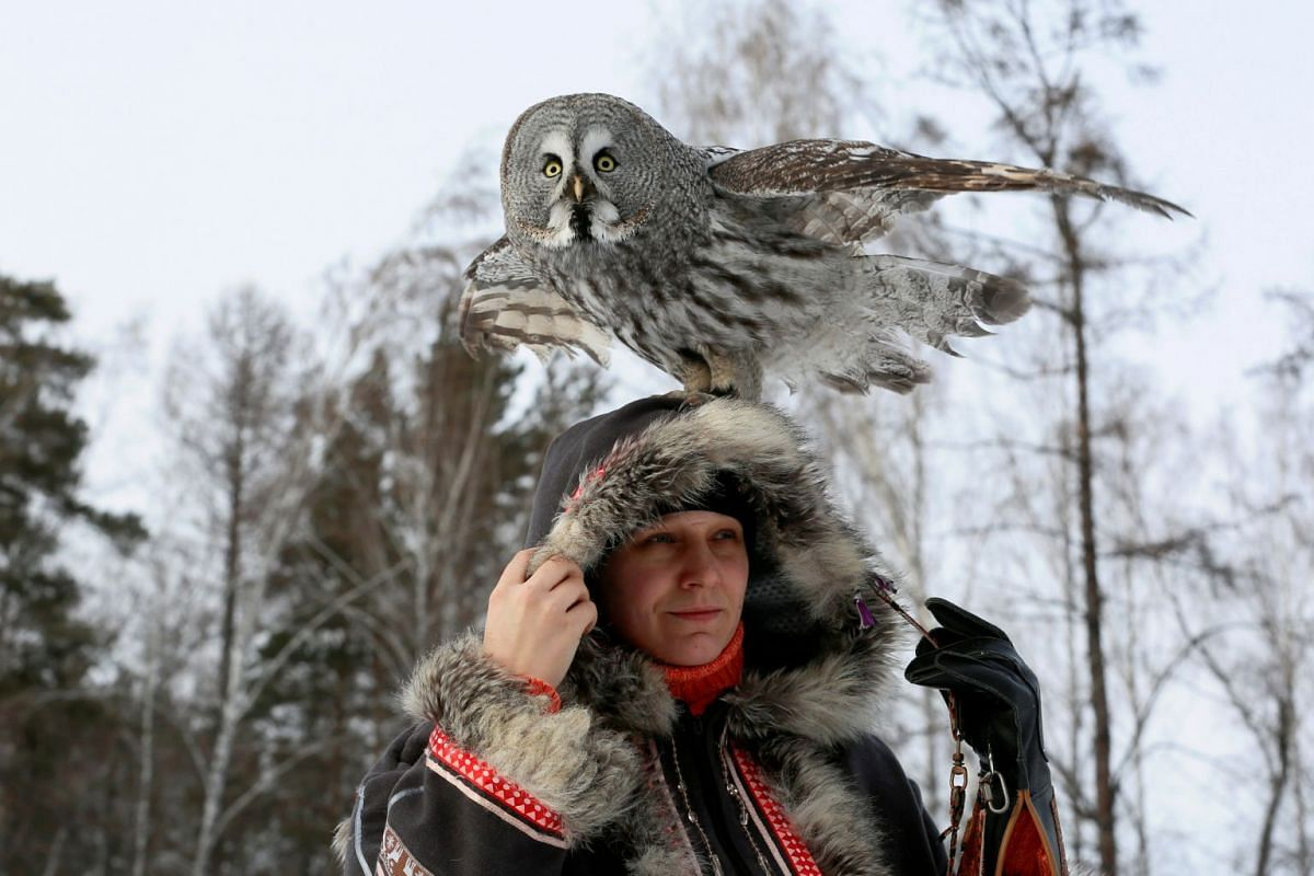 Mykh, a two-year-old great grey owl, sits on the head of ornithologist Daria Koshcheyeva during a training session, which is part of a local zoo project to tame wild animals for research and interaction with visitors, in the Siberian Taiga forest in