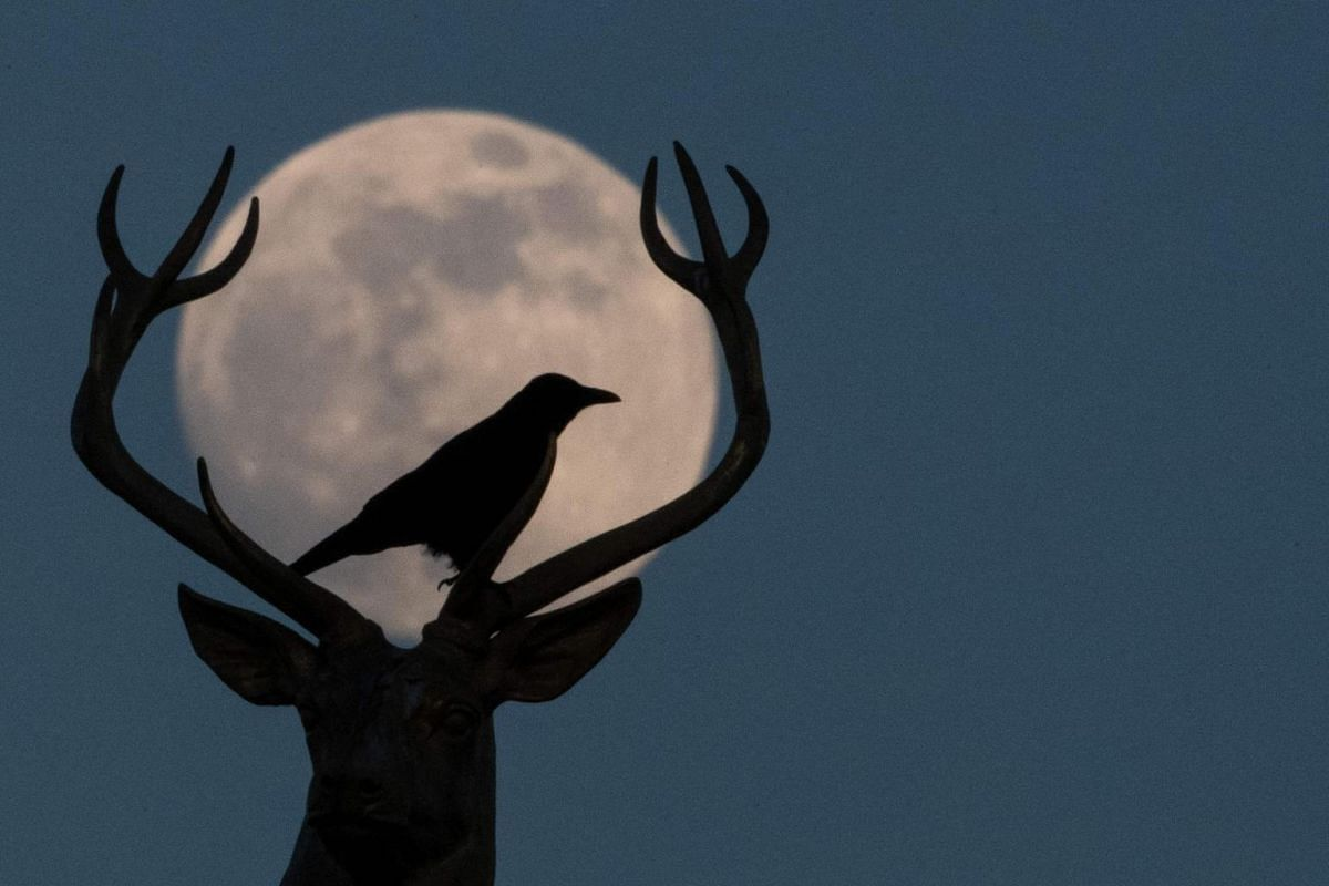 A crow sits atop the deer sculpture by Ludwig Habich on the roof of the art house in Stuttgart in front of the almost full moon, on Feb 18, 2019.