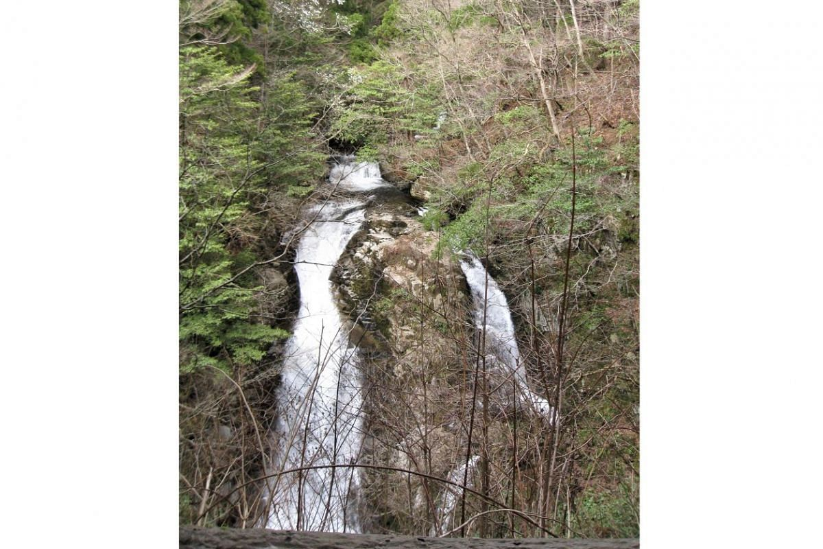 A waterfall in Ashizu Valley Trail Therapy Road in Chizu Town, where visitors can go forest bathing.