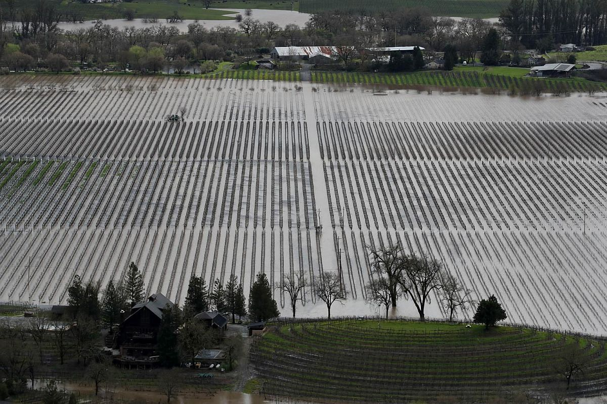 A view of a flooded vineyard on Feb 27, 2019, near Guerneville, California.