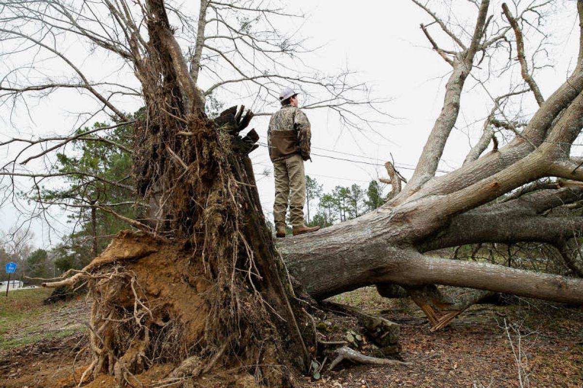 A young man stands on a downed tree trunk after two back-to-back tornadoes hit Beauregard, Alabama, on March 4, 2019, killing at least 23 people.