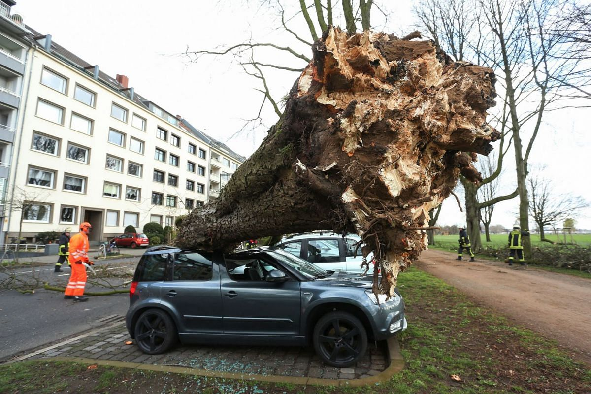 """A fallen tree lies on cars at the Cecillien avenue after a storm dubbed """"Eberhard"""" hit the area on March 10, 2019, in North Rhine-Westphalia, Dusseldorf. PHOTO: DPA"""