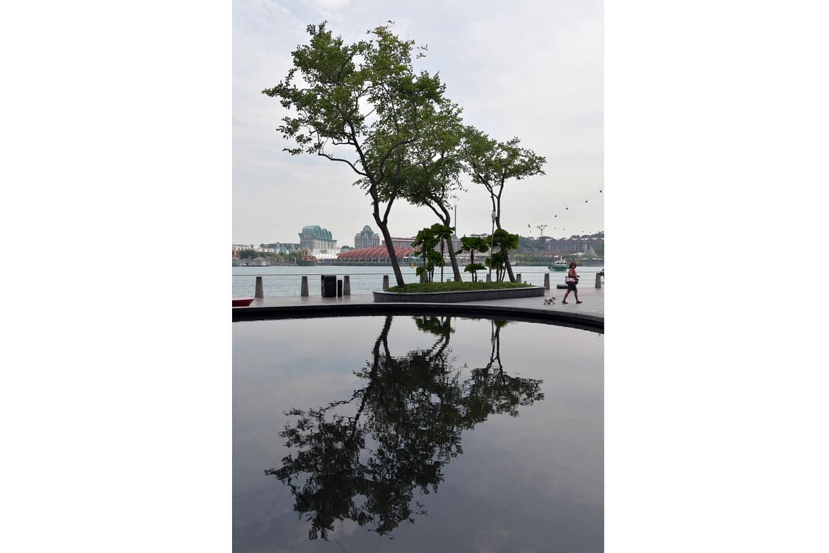 A tree casts an artistic reflection on a water feature outside VivoCity shopping mall, with Sentosa visible in the background.
