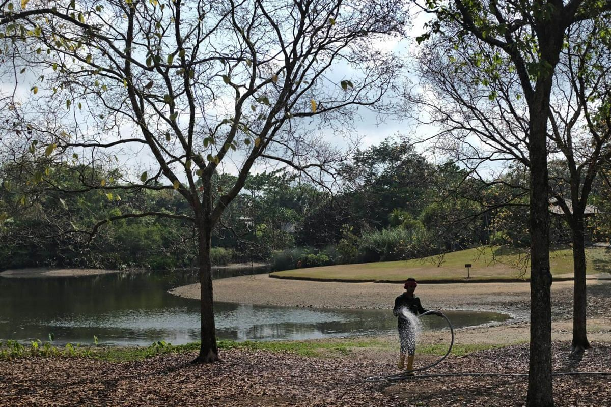 A worker waters the parched ground by Eco Lake at the Singapore Botanic Gardens, on March 13, 2019.