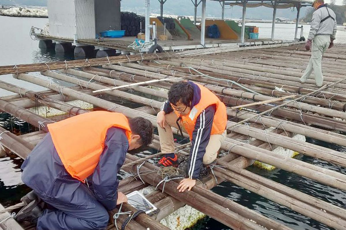 Computer scientists installing a sensor on an oyster raft. The iOstrea project seeks to modernise oyster farming with drone imagery, ICT-enabled buoys and artificial intelligence analysis of data. Workers assembling vehicle engines at the Mazda facto