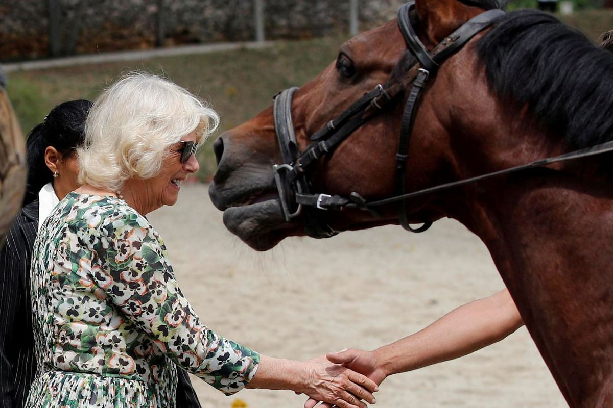 Britain's Camilla, Duchess of Cornwall visits the National Equestrian Centre in Havana, Cuba March 27, 2019.