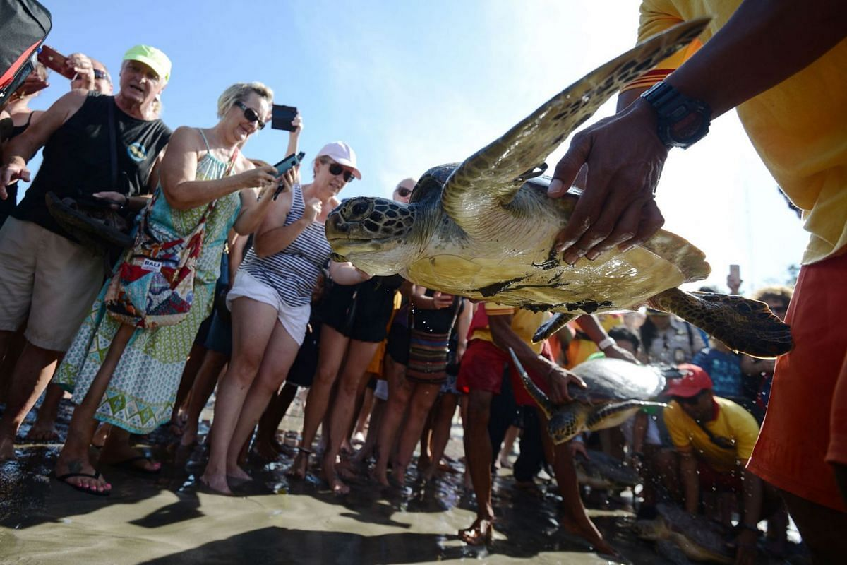 Tourists watch as a green turtle is released at Kuta beach on Indonesia resort's island of Bali on March 27, 2019. Some 18 green turtles - poached for their meat - were released back into the ocean after they were seized by Indonesian police in Giany