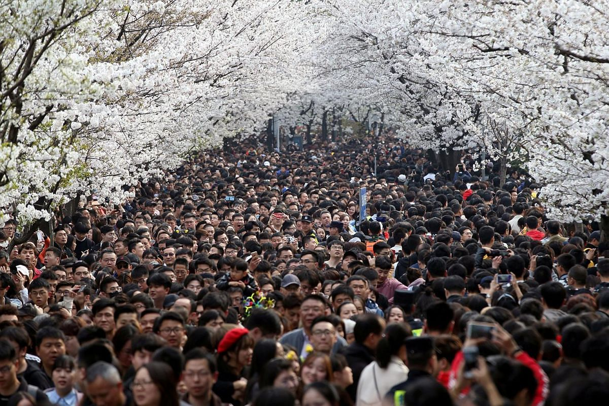 Visitors flock onto a street, under blooming cherry blossoms, near Jiming Temple in Nanjing, Jiangsu province, China, on March 23, 2019.