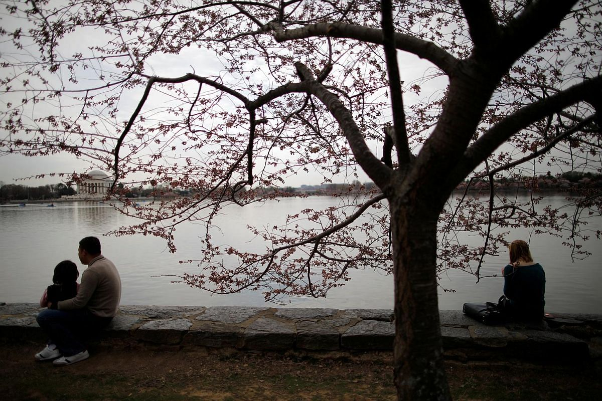 People sit by the Tidal Basin as cherry blossoms begin to bloom in Washington, DC on March 29, 2019.